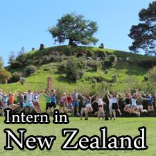 Internships New Zealand